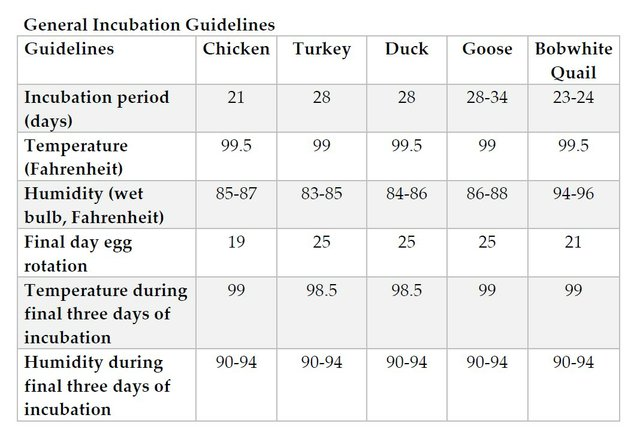 Incubation guidelines.jpg
