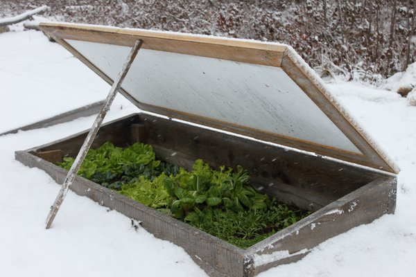 cold frame with snow.jpg