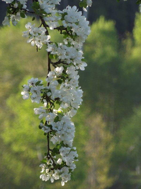 #3 Spring Blossom.JPG