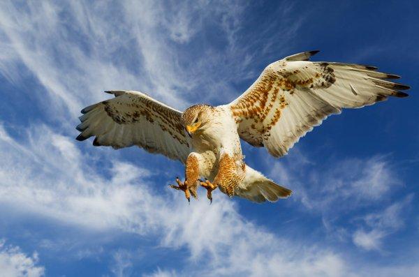 Birds of Prey 72_LARGE.jpg