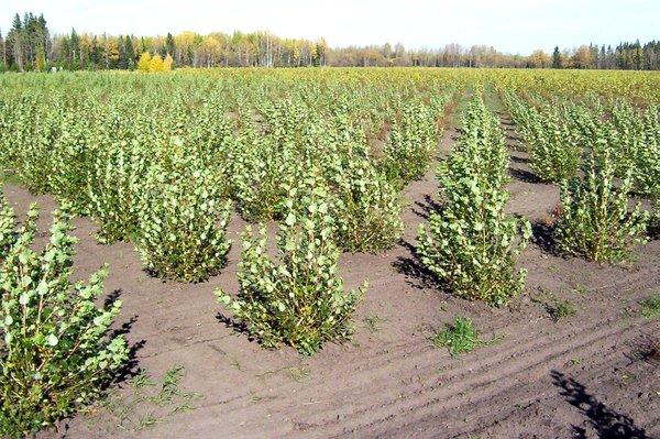Tree farming 3.jpg