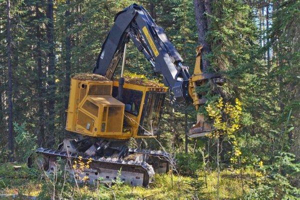Tree farming 9.jpg