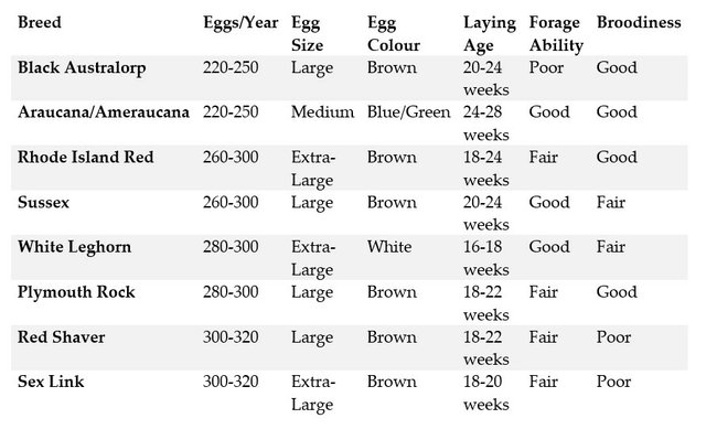 egg layers.jpg