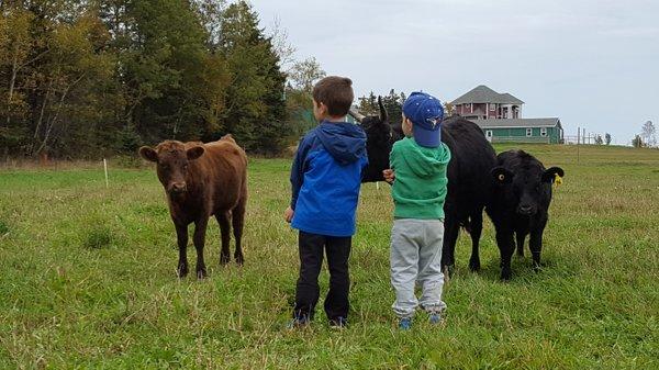 Boys and dexter calves.jpg