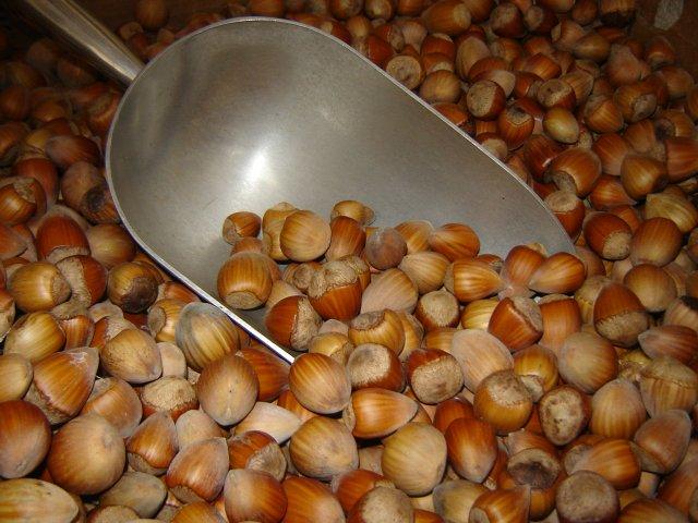 hazelnuts scooped.jpg