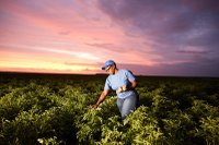 Farmer in a regenerative agriculture field
