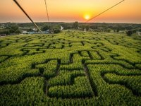 A Corn Maze in St Adophine, Manitoba