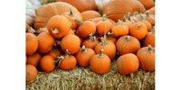 Editorial Pumpkin Patch