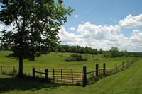 A green fenced pasture